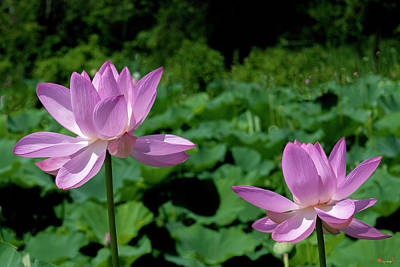 Photograph - Lotus--sisters II Dl0083 by Gerry Gantt