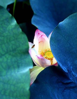 Lotus Leaves Photograph - lotus Temptation of depth by Lian Wang