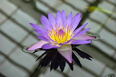 Lotus Art Print by Vari Buendia