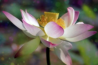 Spring Mixed Media - Lotus With Bokeh by Georgiana Romanovna