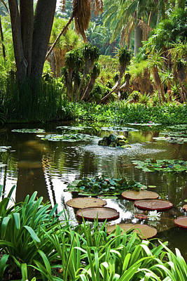 Photograph - Lotusland Pond by Roger Mullenhour