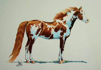 Drawing - Loud Overo American Paint Quarter Horse by Cheryl Poland