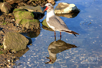 Photograph - Loudmouth In Cape May by John Rizzuto