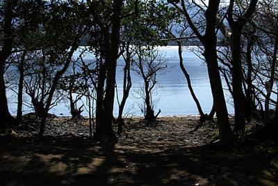 Photograph - Lough Leane Through The Woods by Aidan Moran