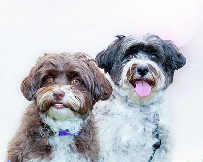 Photograph - Louie And Phoebe 1 by Jeanette Fellows