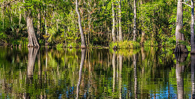Cypress Swamp Photograph - Louisiana Bayou 3  by Steve Harrington