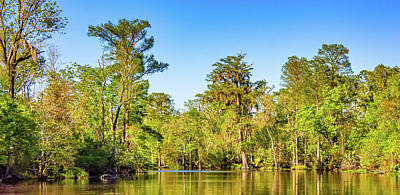 Cypress Swamp Photograph - Louisiana Bayou 4 by Steve Harrington