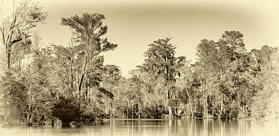 Cypress Swamp Digital Art - Louisiana Bayou 5 - Paint Sepia by Steve Harrington