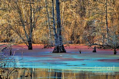 Photograph - Louisiana Bayou by Diana Mary Sharpton