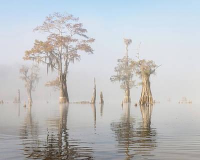 South Louisiana Photograph - Louisiana Cypress Swamp On A Foggy Morning Five by Bill Swindaman