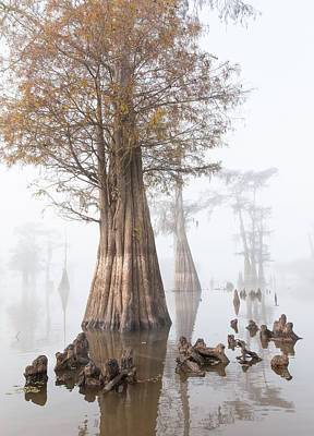 Cypress Swamp Photograph - Louisiana Cypress Swamp On A Foggy Morning Four by Bill Swindaman