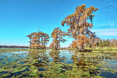 Photograph - Louisiana Fall by Andy Crawford