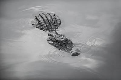 Louisiana Gator  Art Print by Alicia Morales
