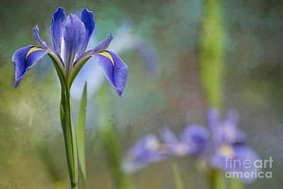 Fleur De Lis Photograph - Louisiana Iris by Bonnie Barry