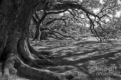 Photograph - Louisiana Oak Trees In Black And White by Adam Jewell