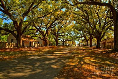 Photograph - Louisiana Plantation Landscape by Adam Jewell