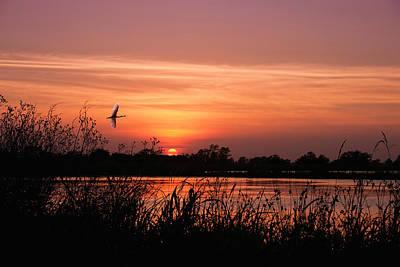 Louisiana Rice Field At Sunset Original
