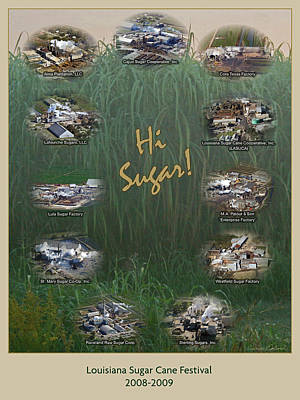 Photograph - Louisiana Sugar Cane Poster 2008-2009 by Ronald Olivier