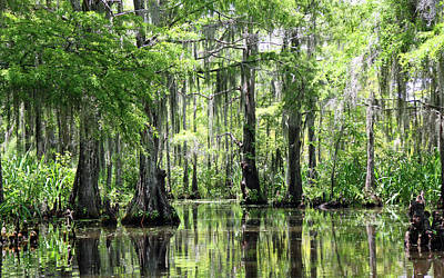 Photograph - Louisiana Swamp 2 by Inspirational Photo Creations Audrey Taylor