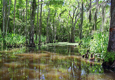 Photograph - Louisiana Swamp 3 by Inspirational Photo Creations Audrey Taylor