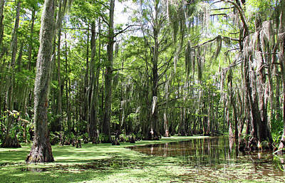 Photograph - Louisiana Swamp 4 by Inspirational Photo Creations Audrey Taylor