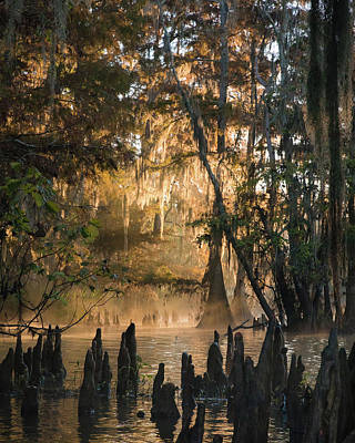 Louisiana Swamp Photograph - Louisiana Swamp - Early Morning Light by Bill Swindaman