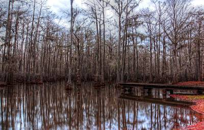 Photograph - Louisiana Swamp In Winter by Ester Rogers