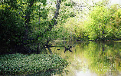 Photograph - Louisiana Swamp by Kathleen K Parker