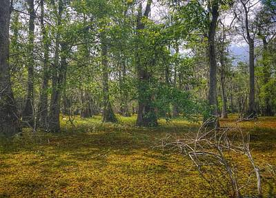 Photograph - Louisiana Swamp by Mary Capriole