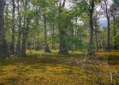 Photograph - Louisiana Swamp by Mary Capriole