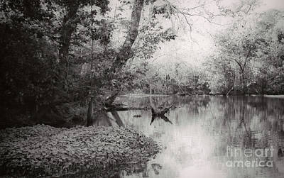 Photograph - Louisiana Swamp - Vintage Bw by Kathleen K Parker