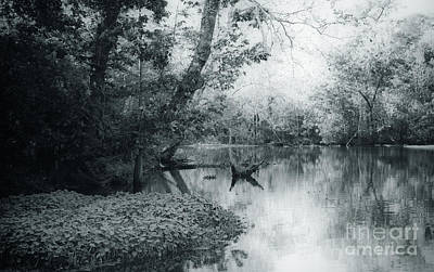 Photograph - Louisiana Swamp - Vintage  by Kathleen K Parker