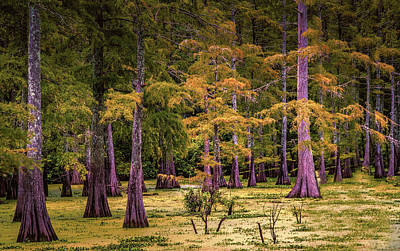 Digital Art - Louisiana Swamps by Melinda Dreyer