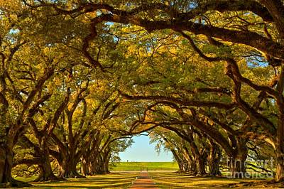 Photograph - Louisiana Tunnel Of Oaks by Adam Jewell