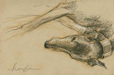 Greyhound Drawing - Lounging Greyhound by Tracie Thompson