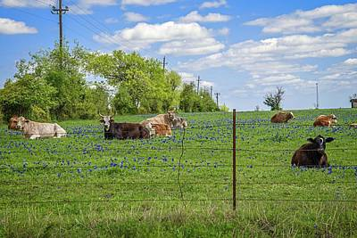 Photograph - Lounging In The Bluebonnets by Lynn Bauer
