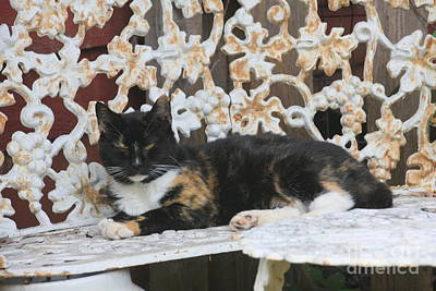 Photograph - Lounging Kitty by Wendy Coulson
