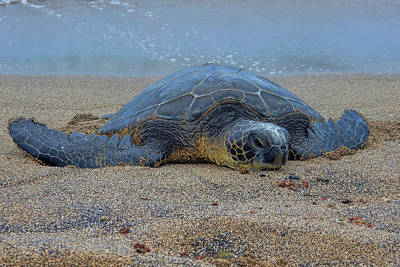 Photograph - Lounging On The Sand by Pamela Walton