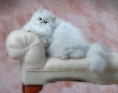 Photograph - Lounging Persian Cat by David and Carol Kelly