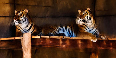 Photograph - Lounging Tigers by Lana Trussell