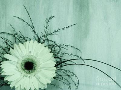 Gerber Daisy Photograph - Love And Purity by Marsha Heiken