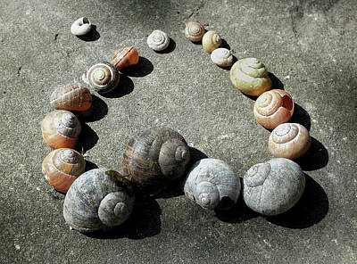 Love And Shells Print by Philip Openshaw