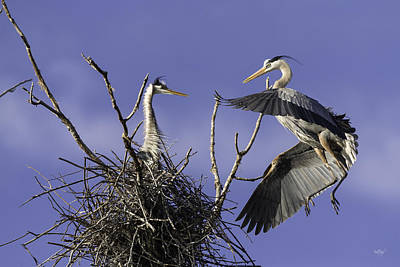 Blue Heron Photograph - Love At First Sight by Everet Regal