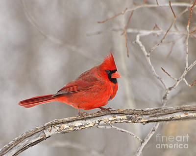 Photograph - Love Bird by Joshua McCullough