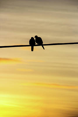 Photograph - Love Bird On A Wire by Angie Schutt