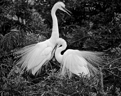 Photograph - Love Birds by Carol Bradley
