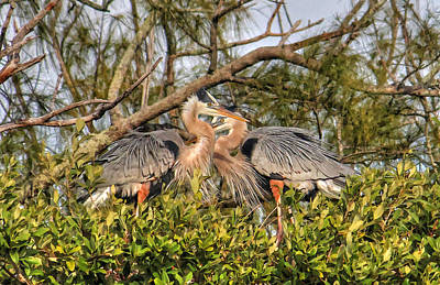 Photograph - Love Birds - Great Blue Heron by HH Photography of Florida