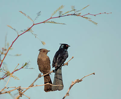 Photograph - Love Birds by Loree Johnson