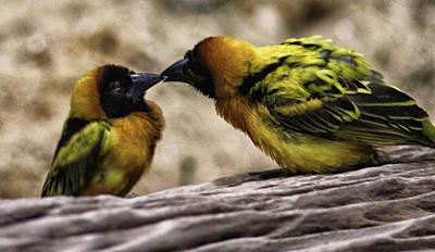 Finches Photograph - Love Birds by Martin Newman
