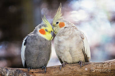 Photograph - Love Birds by Stephanie Hayes